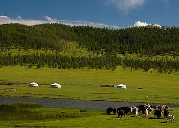 Trekking Mongolie : Randonnée-découverte en pays nomade
