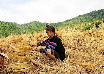 Trekking Laos : La vie des ethnies du Nord, randonnées et rencontres