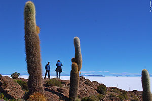 Trekking Bolivie : Salars et la cordillère Royale