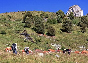 Trekking Suisse : Trek autour des 4000 du Valais