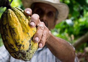 Trekking Équateur : Sur la route du cacao