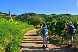 Trekking France : Alsace : villages, châteaux et forteresses médiévales