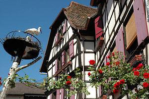Trekking France : Alsace, de vins en châteaux