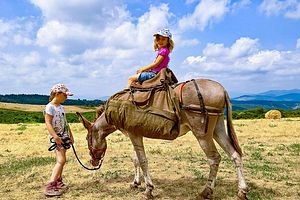 Trekking France : Les Cévennes du Sud avec des ânes