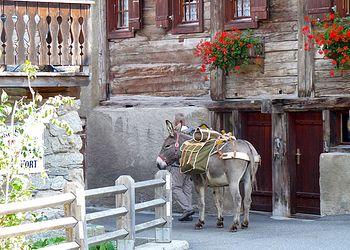 Trekking France : Le Tour du Mont Blanc Nord, en famille avec des ânes de Courmayeur à Montroc.