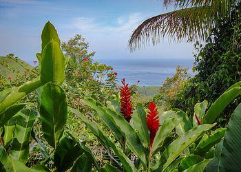 Trekking Guadeloupe : L\'île Papillon