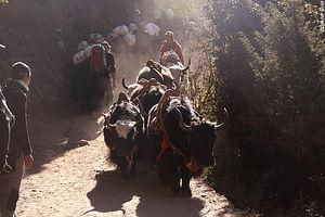 Trekking Nepal : Le Langtang, à la frontière du Tibet