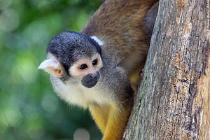 Trekking Pérou : L\'Amazonie